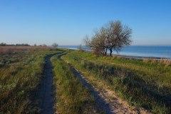 В ягорлицькому заказнику. Фото: Wereskowa, CC-BY-SA-4.0-