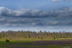 Ліс в Деснянсько-Старогутському національному парку. Фото: Шнурочок. CC BY-SA 4.0