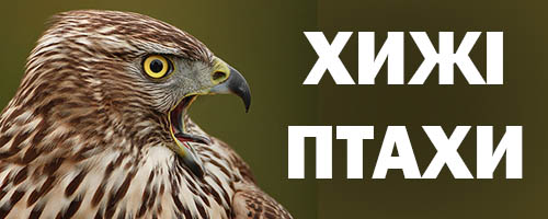 Сайт про хижих птахів